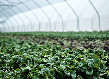 consulting in armenia greenhouse business plan